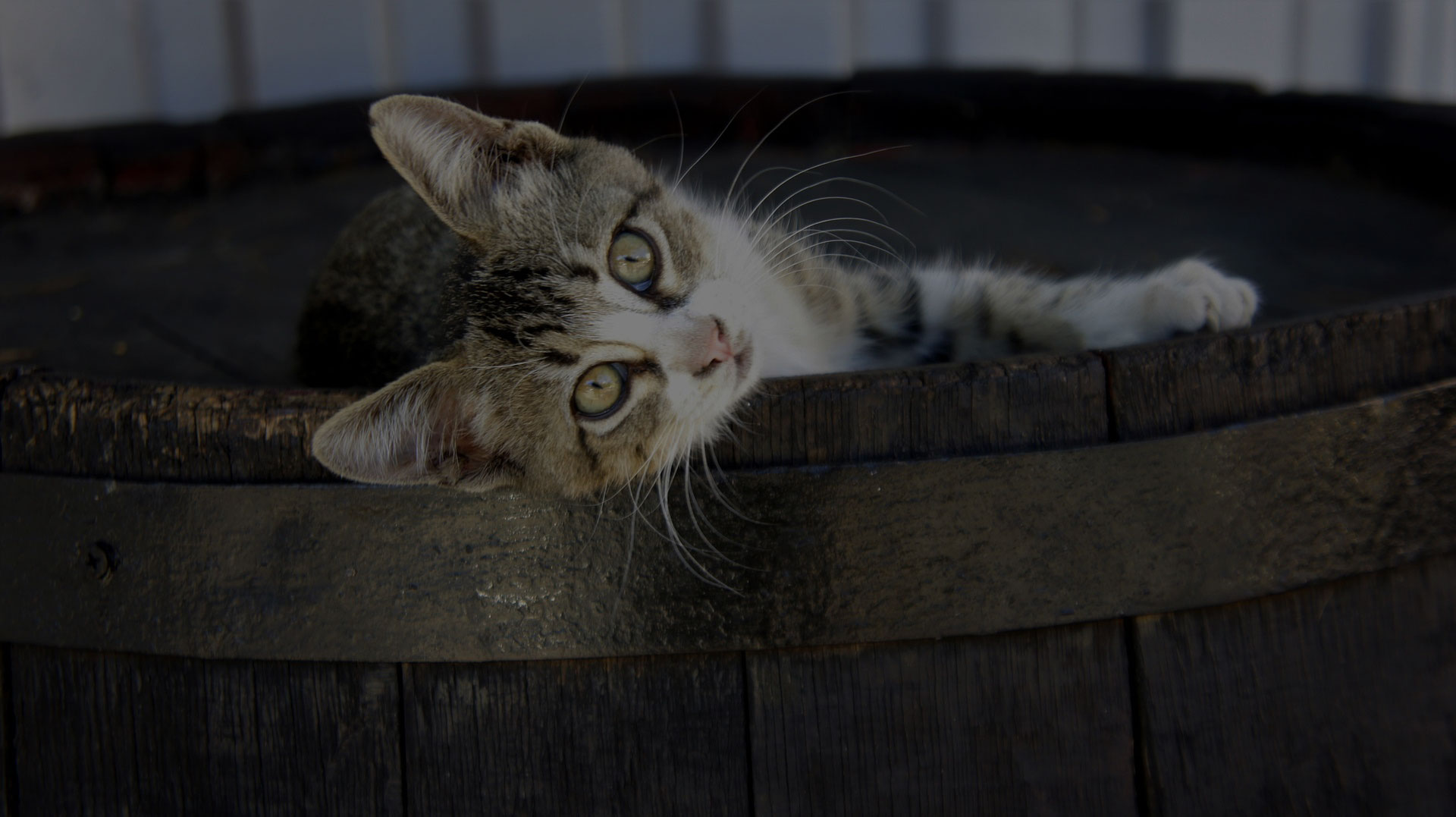 Cute little Cat laying on Wooden Barrel