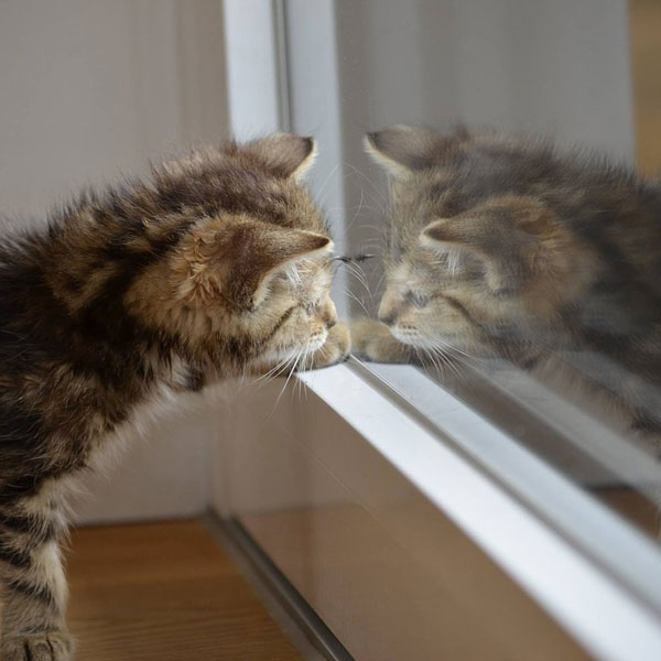 Cute cat looking at Mirror