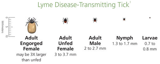 TICK TALK WITH DONCASTER ANIMAL CLINIC! - Vet In Thornhill