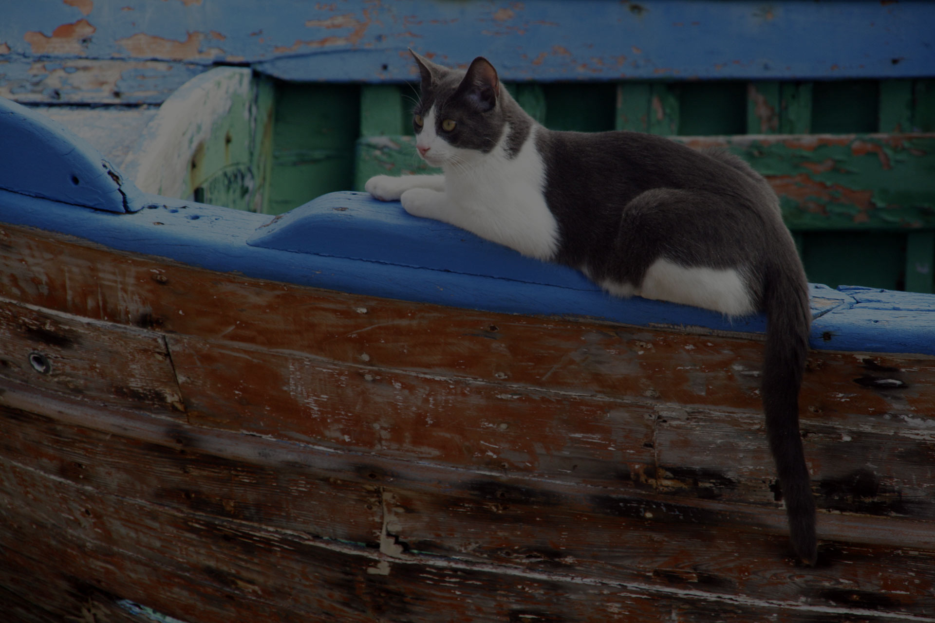 Cat lying on an old boat in Italian port